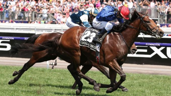 Cross Counter horse
